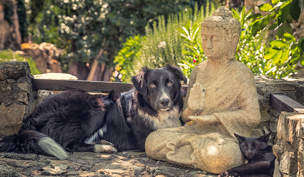 Gentle QiGong Healing for Animals